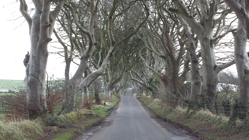 Game of Thrones Filming Location: The Dark Hedges